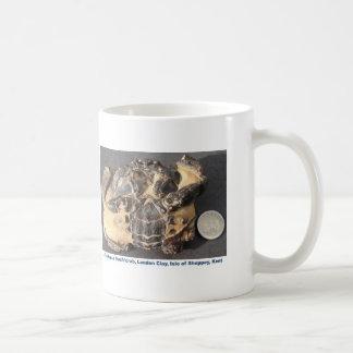 Versteinerte Krabbe vom Eozän-London-Lehm Kaffeetasse