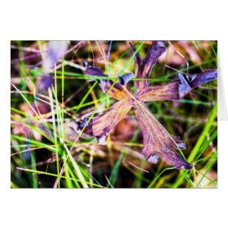 Verwelkte lila Blume Karte