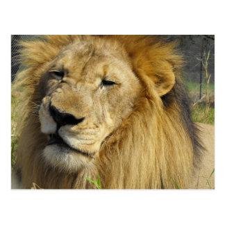 Verwirrungs-Löwe Postkarte