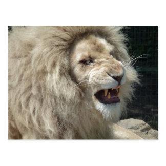 Verwirrungs-weißer Löwe Postkarte
