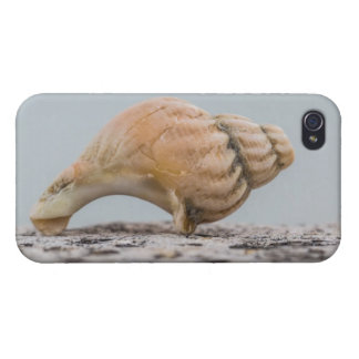 Verwitterte SeeMuschel iPhone 4/4S Case