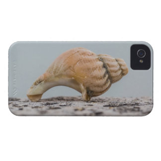 Verwitterte SeeMuschel iPhone 4 Cover
