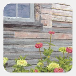 Verwittertes Holz und Zinnias Quadratischer Aufkleber