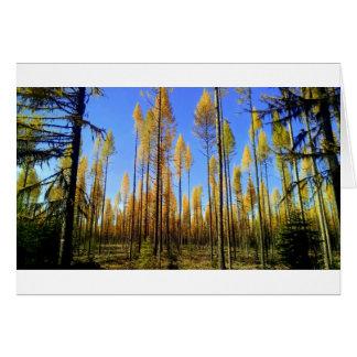"""""""Verzauberter Wald"""" Gruß-Karte Karte"""
