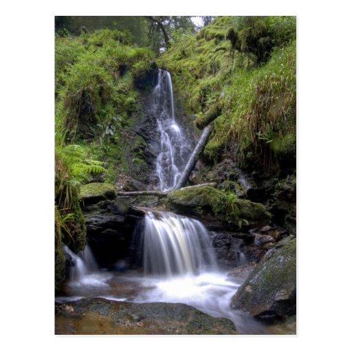 Verzauberter Wald Postkarte