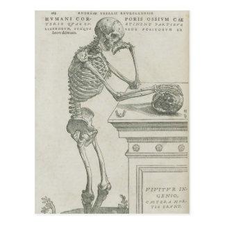 Vesalius skelettartiges Bild Postkarten