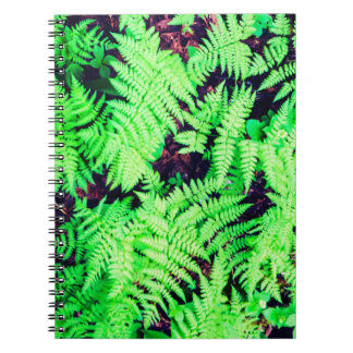 Vibrierende grüne Farne Notizblock