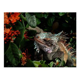 Vibrierende Leguan-Postkarte, die Postkarte