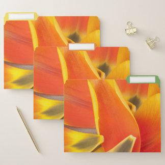 Vibrierende orange Tulpe-Blumenblatt-Fotografie Papiermappe