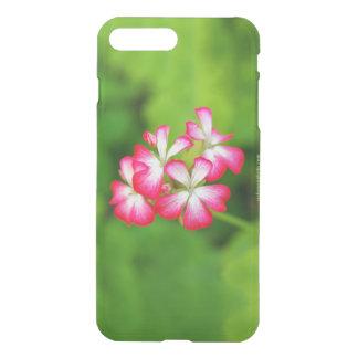 Vibrierende rosa Pelargonien | iPhone 8 Plus/7 Plus Hülle