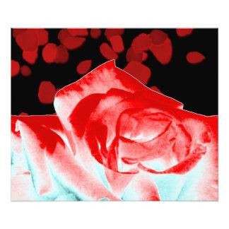 Vibrierende Rote Rose Fotodruck