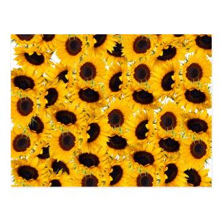 Vibrierende schöne Sonnenblume-Natur-Blumenmuster Postkarte