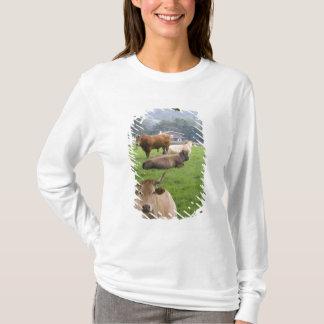 Vieh auf ländlichem Ackerland nahe der Stadt von T-Shirt