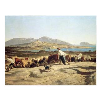 Vieh, das nahe Marseille, 1853 in Herden lebt (Öl Postkarte