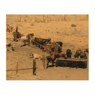 Vieh Holzleinwand
