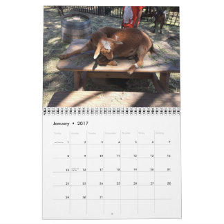 Vieh-Kalender Abreißkalender