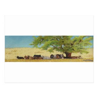 Vieh, Kuh Postkarte