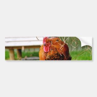 Vieh-Natur-Fotografie des Hahn-| Autoaufkleber