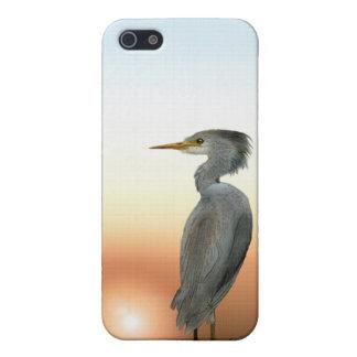 Vieh-Reiher, Dünen u. Sonnenuntergang-wild lebende Hülle Fürs iPhone 5