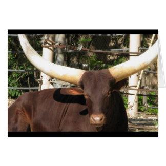 Vieh Texas Longhorn Karte