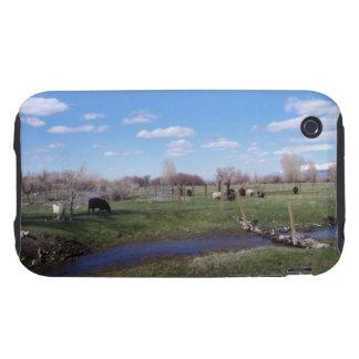 Viehbestand gestalten landschaftlich iPhone 3 tough etuis