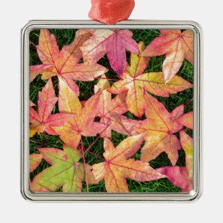 Viel buntes Herbstahorn-Blätter auf grünem Gras Quadratisches Silberfarbenes Ornament