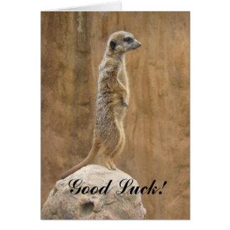 Viel Glück Meerkat Grußkarte
