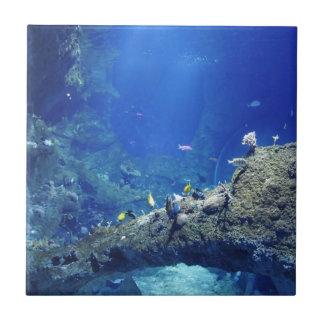 Viele Fische Kleine Quadratische Fliese