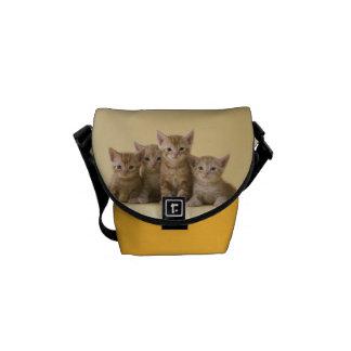 Vier Amerikaner Shorthair Kätzchen Kurier Tasche