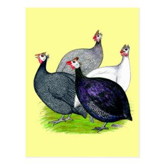 Vier Guinea Postkarte