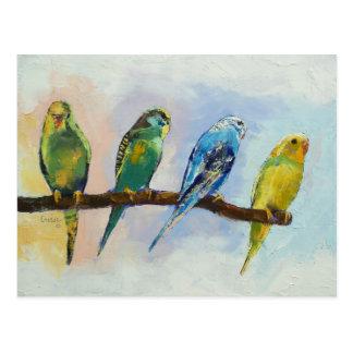 Vier Parakeets-Postkarte Postkarte