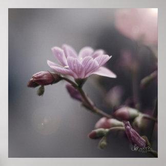 Viereckiger Poster, Blumen/Flowers Poster