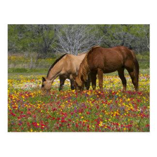 Viertelpferd auf dem Gebiet der Wildblumen nähern Postkarte