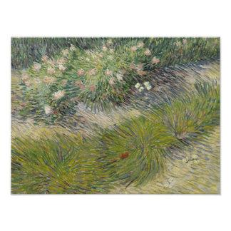 Vincent van Gogh - Gras und Schmetterlinge Fotodruck