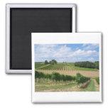 Vineyard - Weinberg (Bordeaux - Frankreich) 04 Quadratischer Magnet