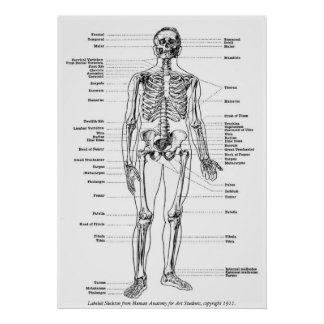Vintag - beschriftetes Skelett Poster