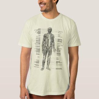 Vintag - menschliche Anatomie Muscles die vorderen T-Shirt