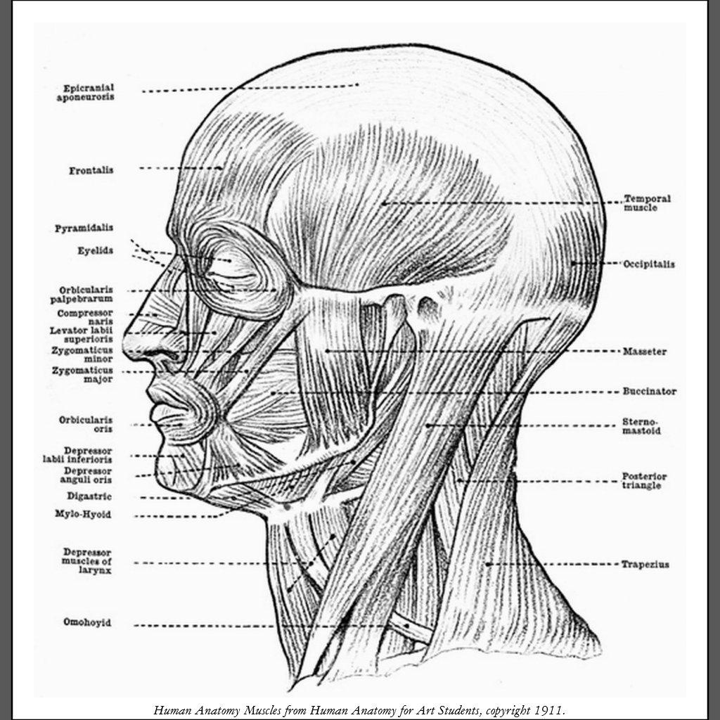 Erfreut Menschliche Anatomie Des Magens Bereich Zeitgenössisch ...