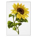 Vintag - Sonnenblume-Illustration Grußkarten