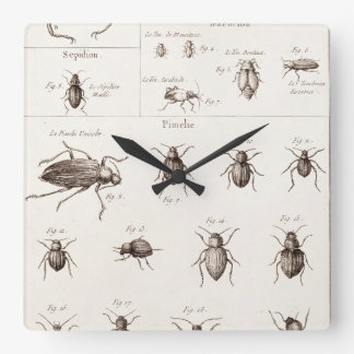 Vintage 1800s Insekten-Wanzen-Käfer-Illustration Wanduhren