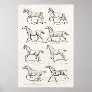 Vintage 1800s Pferdegangart-Illustrations-Pferde Poster