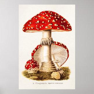Vintage 1800s Pilz-Rot-Pilz-Schablone Poster