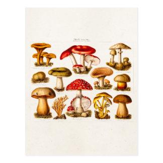 Vintage 1800s Pilz-Vielzahl-Rot-Pilze Postkarte