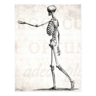 Vintage 1800s Skeleton antike Anatomie-Skelette Postkarte