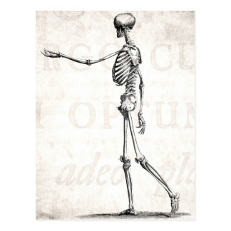 Vintage 1800s Skeleton antike Anatomie-Skelette Postkarten