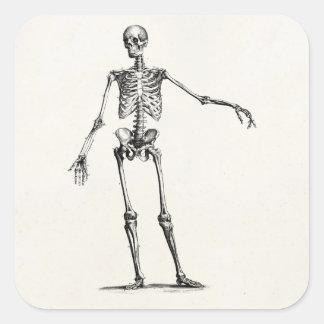 Vintage 1800s Skeleton Retro Anatomie-Skelette Quadratischer Aufkleber