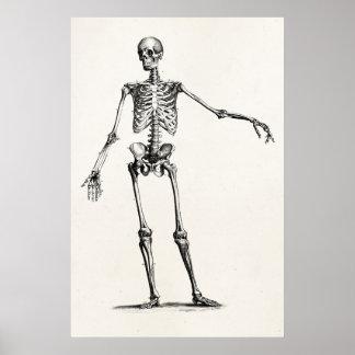 Vintage 1800s Skeleton Retro Anatomie-Skelette Poster