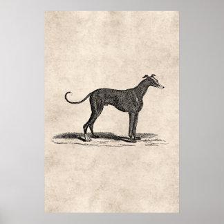 Vintage 1800s Windhund-Hundeillustration - Hunde Plakat
