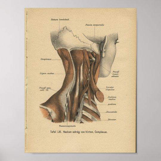 Vintage 1888 Deutsch-Anatomie-Druck-Hals-Muskeln Poster | Zazzle