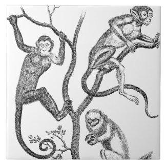 Vintage Affe-Illustration - Affen 1800's Große Quadratische Fliese